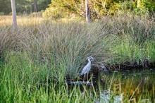 Bird in marshland